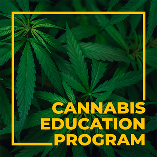 Picture of Scottsdale Community College's Cannabis and Social Equity Program